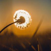 солнечный цветок :: Ирина Зуева