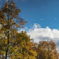 Деревья в воде (отражения 2) :: Valerii Ivanov