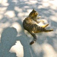 кошка и тень :: Елена