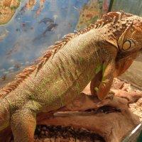 Величие философского созерцания на  суетливую жизнь людей - посетителей выставки редких животных :: Алекс Аро Аро