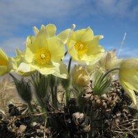 снова весна :: Ольга