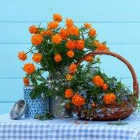 Огоньки цветут - весну  закрывают! :: Наталья Казанцева