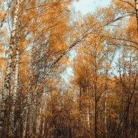 осенний лес :: Ольга (Кошкотень) Медведева