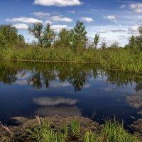 Половинка пруда с облаками. :: Анатолий. Chesnavik.