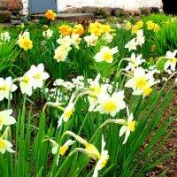цветы :: Сергей Кочнев