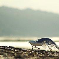 - Я говорю, хорошо, что я не люди, ведь  люди не летают так, как птицы... :: Лилия .