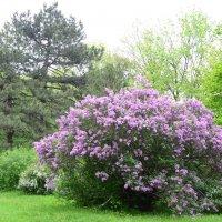 Весной... :: Raisa Ivanova