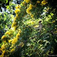 Как хорошо в саду цветочном! :: Валентина К