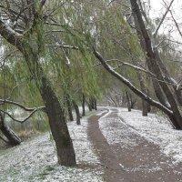 Первый снег, склонились ивы, :: Надежда