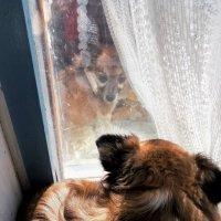 В окно лучше смотреть, чем телевизор! :: Николай Масляев