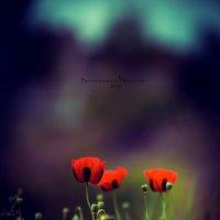 Flowers :: Армен Абгарян