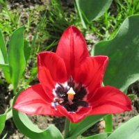 Красный цветок :: Дмитрий Никитин