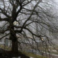 В туманном Петергофе.... :: Юрий Цыплятников