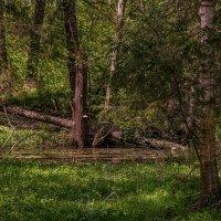 Май в лесу :: Андрей Дворников