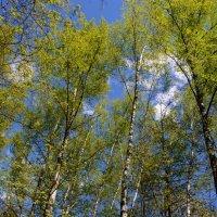 Подними глаза, весна здесь дарит чудеса!.. :: Ольга Русанова (olg-rusanowa2010)