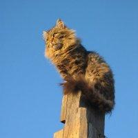 Хужирский кот :: Надежда