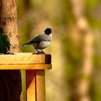 одиночество :: linnud