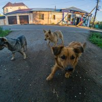 Уличная банда :: Dmitriy Predybailo