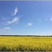 Весеннее поле. :: Валерия Комова