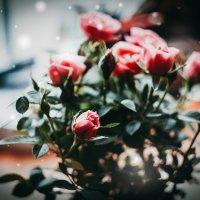 Розы :: Маргарита Си