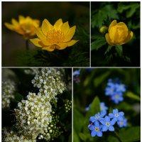 Майские цветы :: Андрей + Ирина Степановы