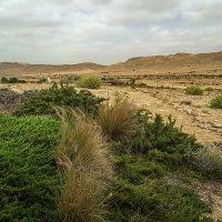 Пустыня Негев :: Виктор Четошников