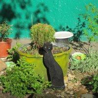 Чёрная кошка :: Дмитрий Никитин