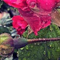 После дождя... :: Сергей Форос