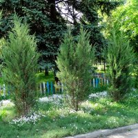 Май в парке... :: Тамара (st.tamara)