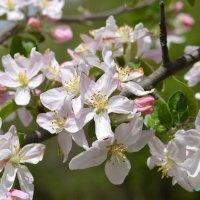 Весна :: Оксана Грищенко