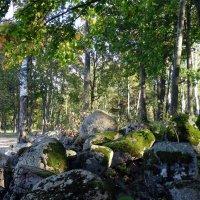 И на камнях растут деревья... :: Наталия Короткова