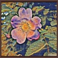 Один цветок 4 стиля живописи :: Владимир Бровко