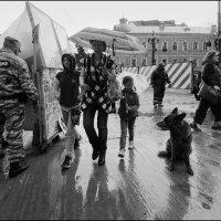 Майский дождь :: Василий Чекорин