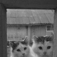 кошки в окошке :: андрей иванов