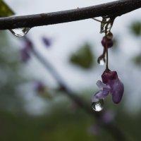 После дождя. :: Svetlana