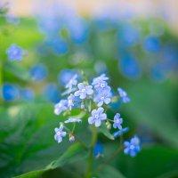 В мамином саду :: Анастасия Шаехова