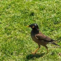 дикая птица средиземного моря :: Лада