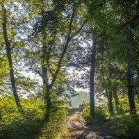В лесу :: Бронислав Богачевский