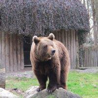 в зоопарке :: tgtyjdrf
