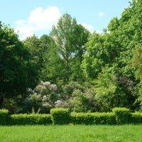 В  Ботаническом саду :: марина ковшова