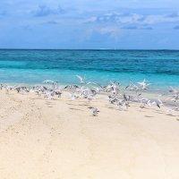 Мальдивы.Необитаемый остров. :: Татьяна Калинкина