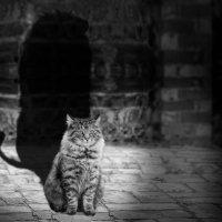 Тень кота барсика:-) :: Сергей Морозов