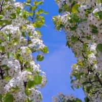 Сад в цвету :: Сергей Морозов