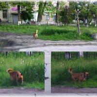 На ранке Ягос (г.Луганск, пл. Ленина) собаки нападают на детей, а Администрация грубит :: Наталья (ShadeNataly) Мельник