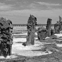 Озеро Эльтон 4 :: Михаил Крюков