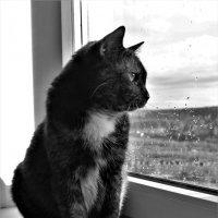 А за окном дождь :: Avada Kedavra!
