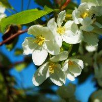 Весна! :: Ирина