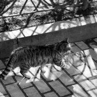 Мимикрия тени под кошку :: Татьяна [Sumtime]