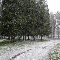снег весенний, майский снег... :: Валентина. .