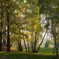 """Утро в парке"". :: Александр"
